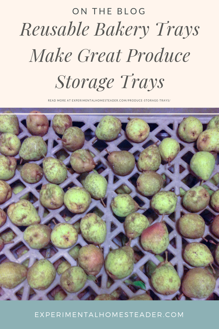 Asian Pears on produce storage trays.