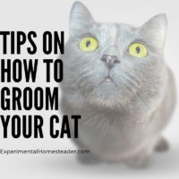 Tips On How To Groom Your Cat