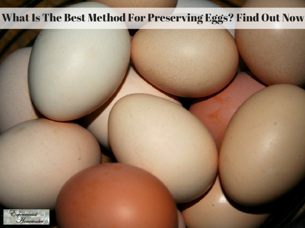 What Is The Best Method For Preserving Eggs? Find Out Now
