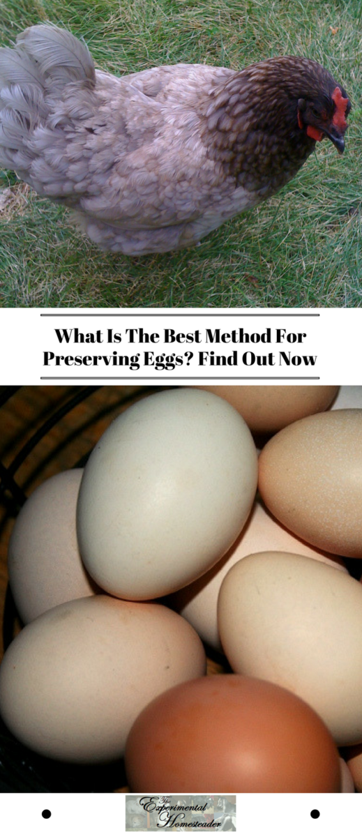 The top photo shows a hen. The bottom photo shows eggs of all different colors.