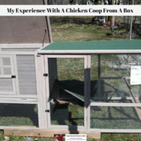 My Experience With A Chicken Coop From A Box