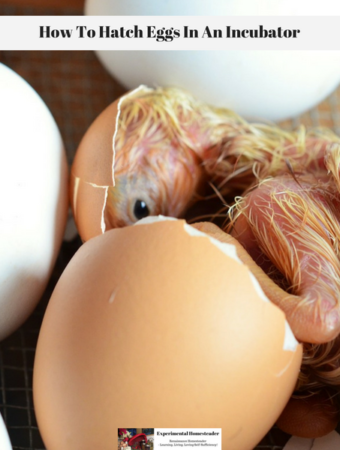 A newly hatched chick still partially inside an egg with other eggs laying close by.