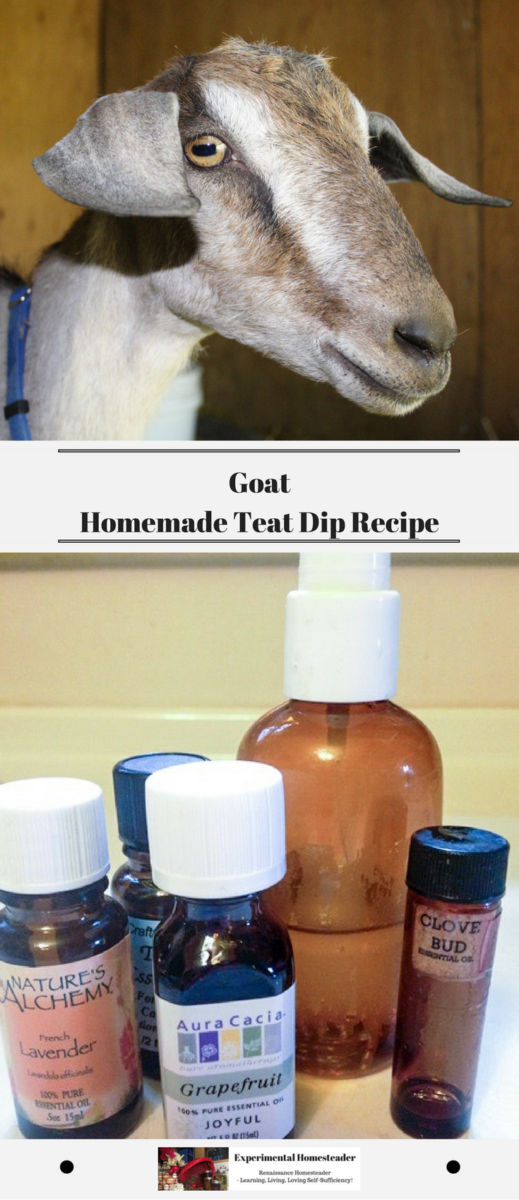 The top photo is Sugar the goat. The bottom photo shows the essential oils and the finished homemade goat teat dip spray.