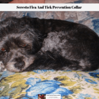 Seresto Flea And Tick Prevention Collar