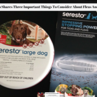 Seresto Shares Three Important Things To Consider About Fleas And Ticks