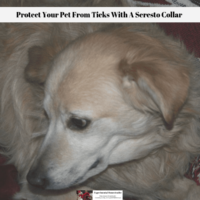 Protect Your Pet From Ticks With A Seresto Collar