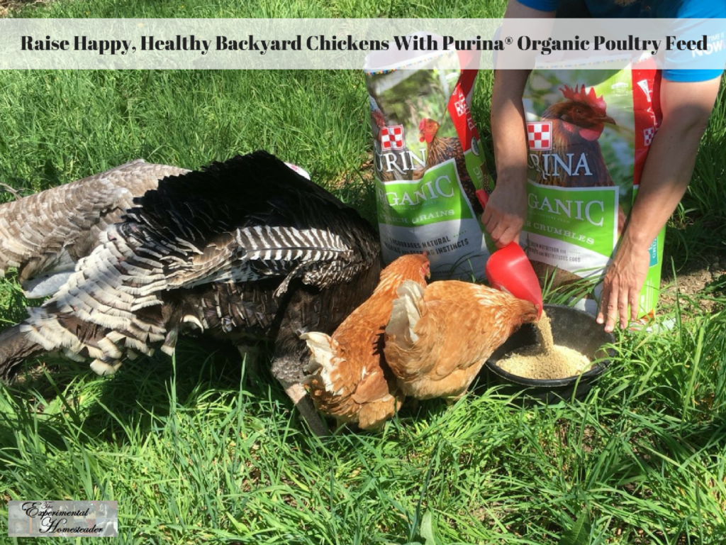 Raise Happy, Healthy Backyard Chickens With Purina® Organic Poultry Feed