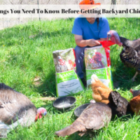 6 Things You Need To Know Before Raising Backyard Chickens