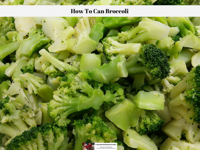 Broccoli cut up and ready to can.