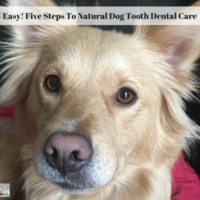 Easy! Five Steps To Natural Dog Tooth Dental Care