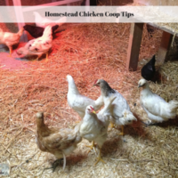 Homestead Chicken Coop Tips