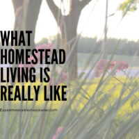 What Homestead Living Is Really Like