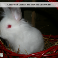 Cute Small Animals Are Not Good Easter Gifts