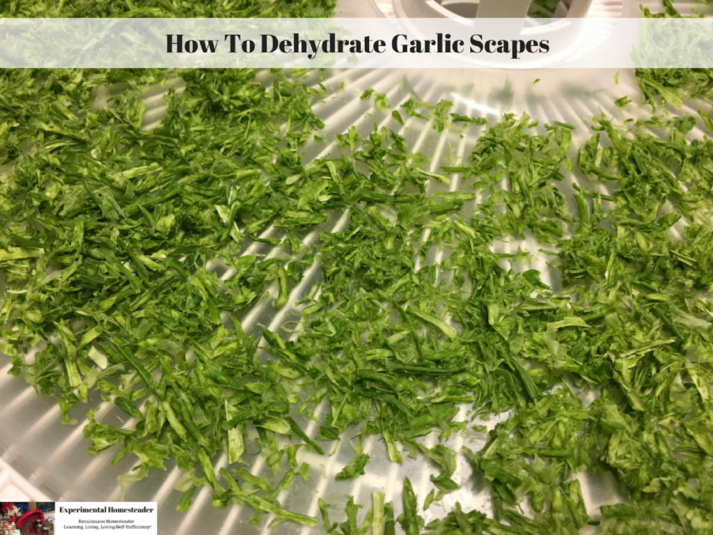 How To Dehydrate Garlic Scapes