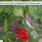 Rural And Urban Gardening Ideas For Homesteaders