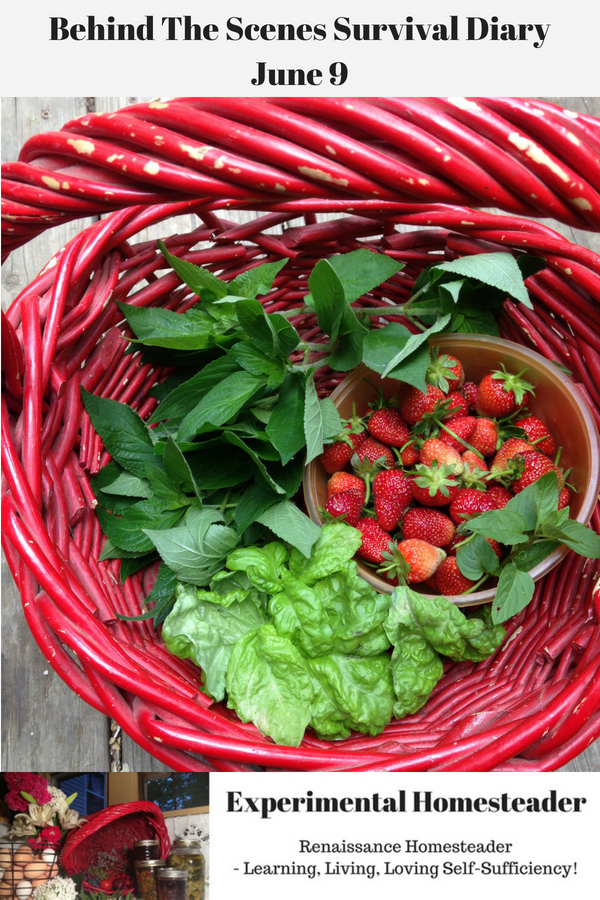 Strawberries, lettuce and herbs in a red basket.