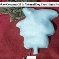 How To Use Coconut Oil In Natural Dog Care Home Remedies