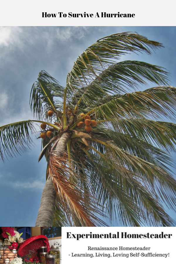 A palm tree being blown by the wind of a hurricane.
