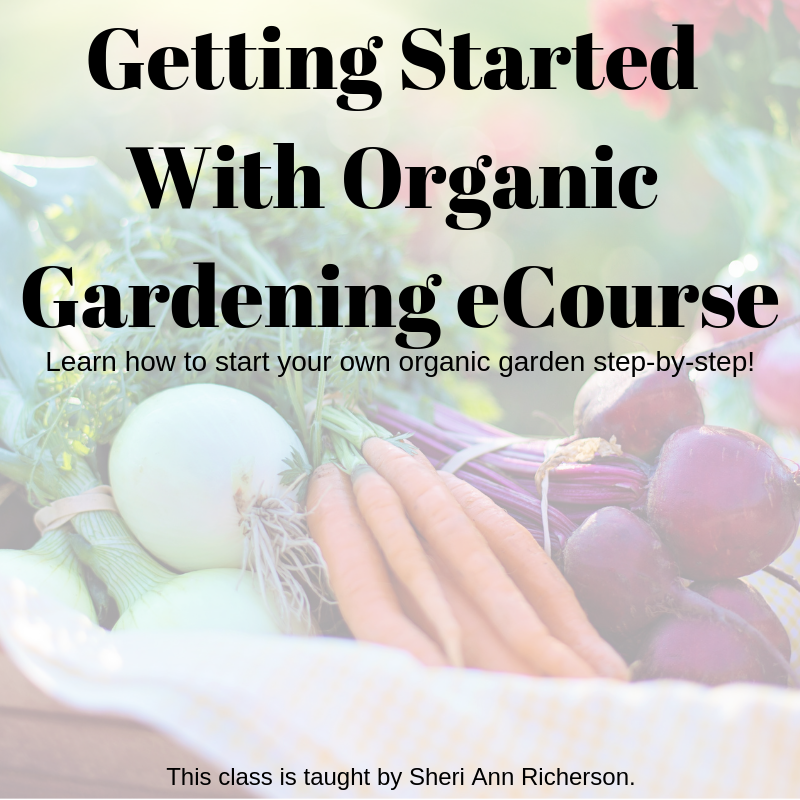 Learn more about the organic gardening ecourse taught by Sheri Ann Richerson.