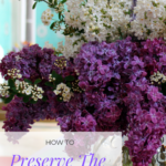 Various colored lilacs in a vase.