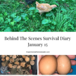 Chicks, wood, eggs, vegetables, fabric organized and our dog - all things we talk about in today's survival diary.